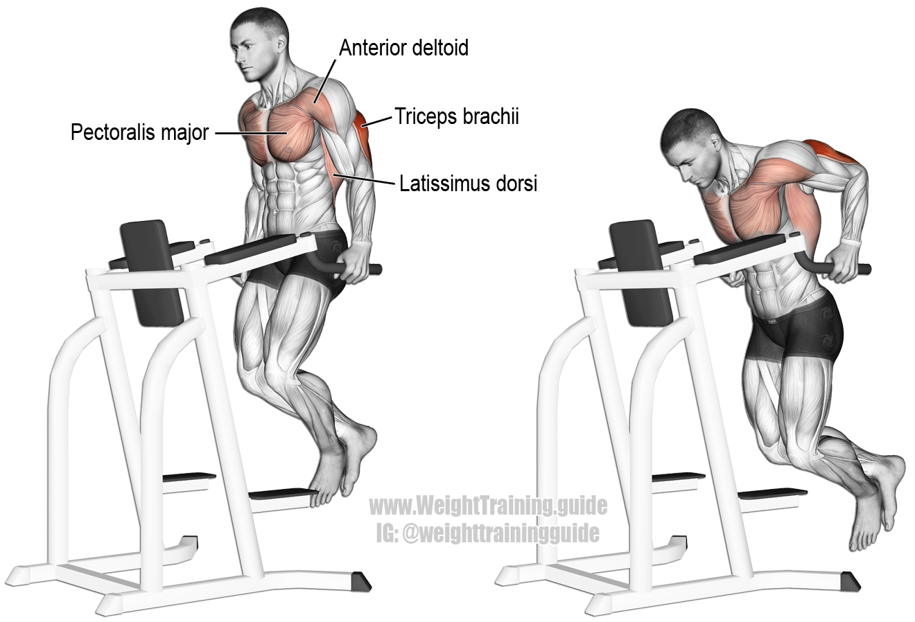 Triceps dip. A compound exercise. Target muscle: Triceps