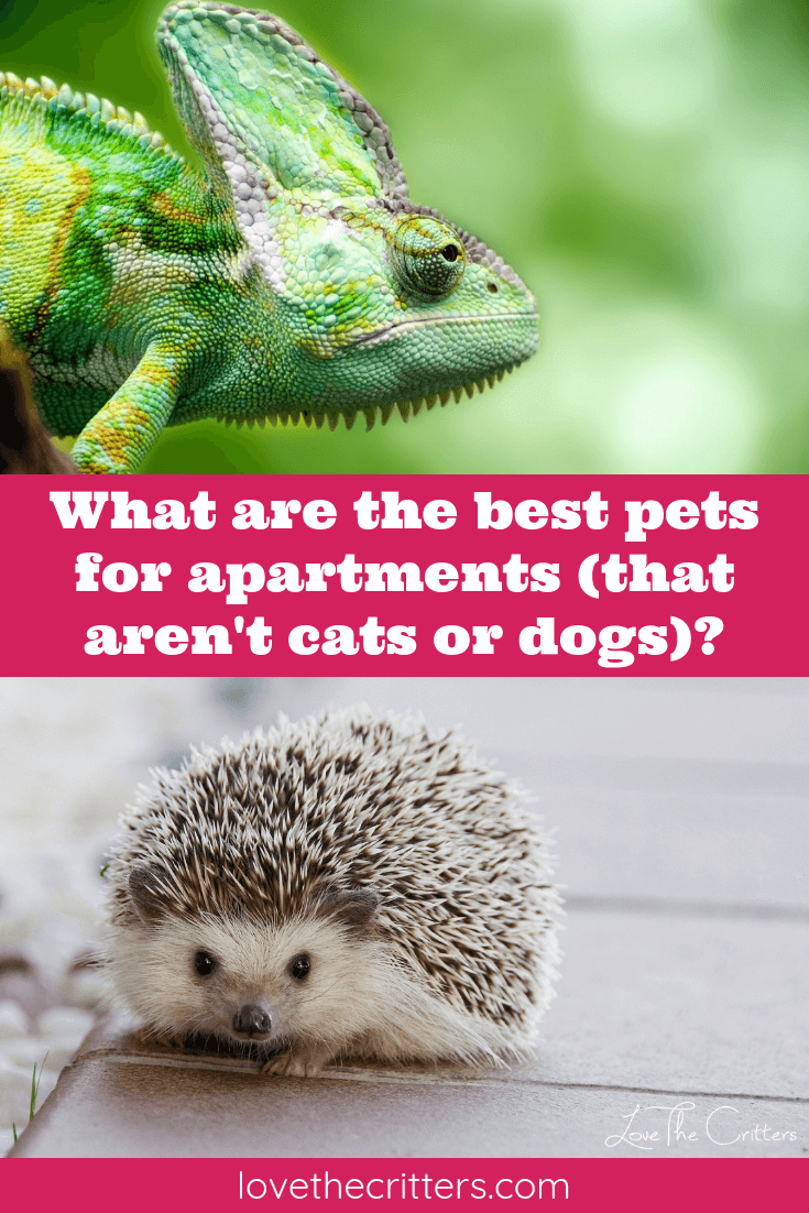 What Are The Best Pets For Apartments That Aren T Cats Or Dogs Best Small Pets Apartment Pets Small Apartment Pet