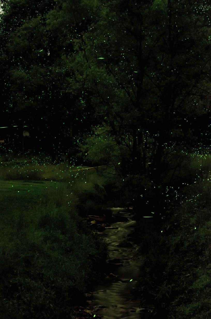 Lightning Bugs With Images Dark Green Aesthetic Scenery