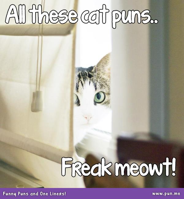 25 Literary Pun Names For Your Cat Cat names, Pun names