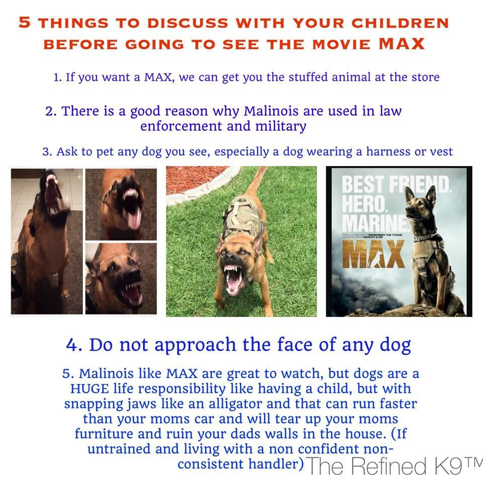 """""""The #BelgiumMalinois is a very special breed. It should be handled and owned by only the best professionals. This is not a normal pet dog.  With the Warner Bros movie, """"Saving Max,"""" coming out, #Malinois professionals, rescues and shelters are concerned that this will become the new fad breed. Please encourage everyone you know to watch and respect the power, speed, intelligence and beauty of this magnificent breed from afar ... not own one."""" -- Bay Area #GermanShepherd Rescue"""
