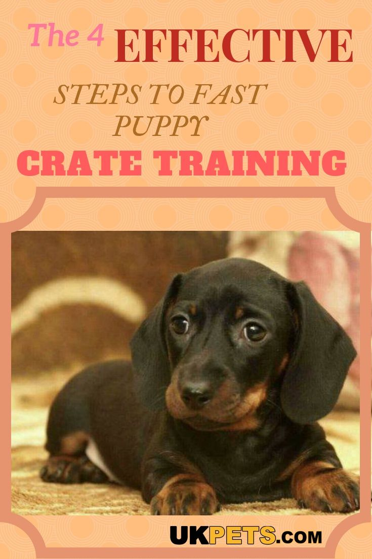 How Can You Crate Train Your Puppy Fast Dog Training Crate