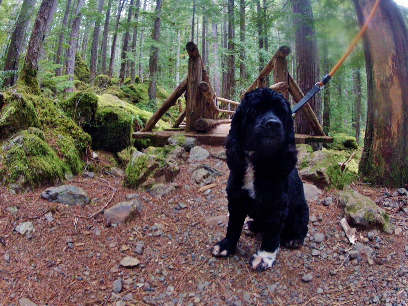 Take Your Dog on 5 Hikes in Grays Harbor