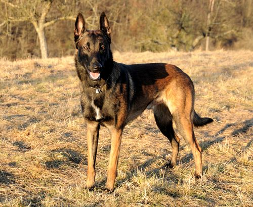 10 Dog Breed Names You Re Probably Mispronouncing Page 2 Of 4