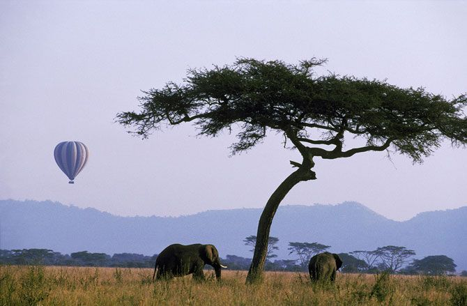 Hot air ballooning over the African plains