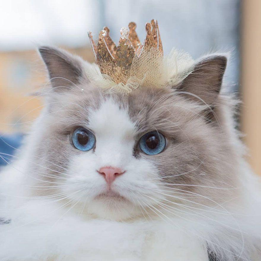 صور قطط جميلة جدا 2018 أجمل صور القطط في العالم 2018 صور قطط كيوت 2018 Kittens Cutest Cats Baby Cats