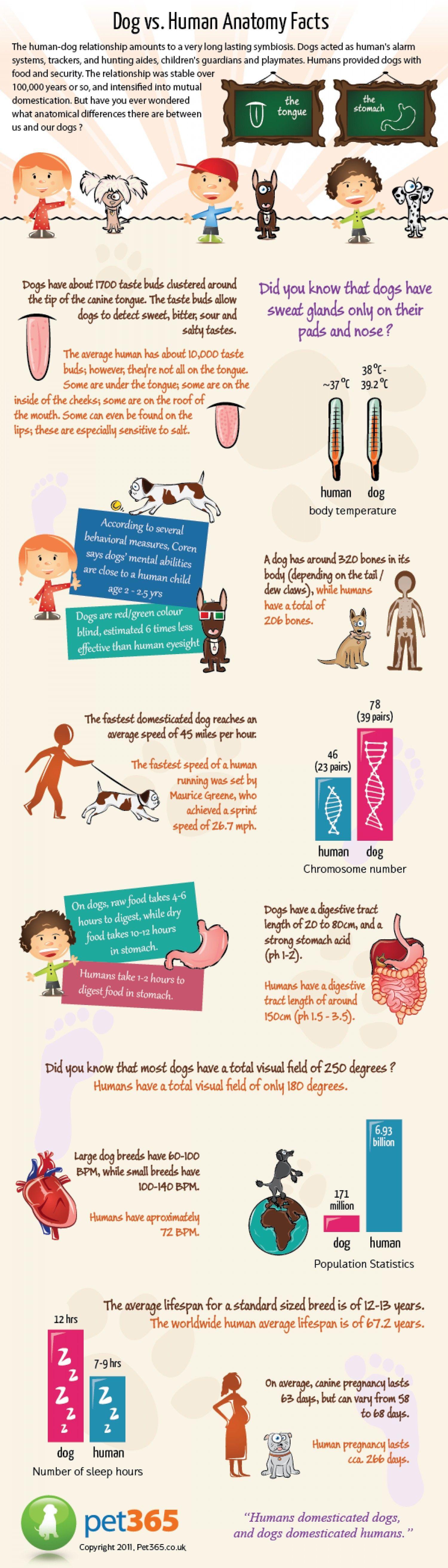 Dog vs Human Anatomy Infographic | For Zoe | Pinterest | Human ...
