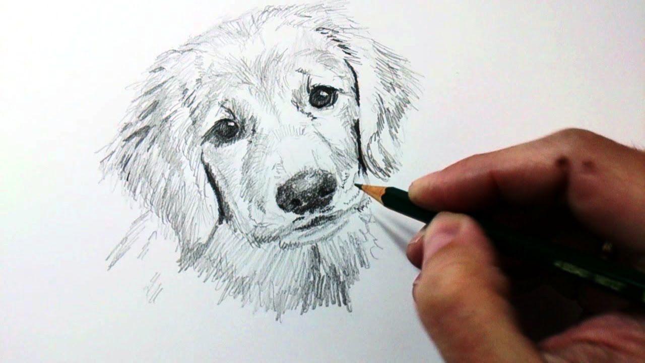 Tecnicas Y Tips De Dibujo Con Lapiz De Grafito Y Como Dibujar Un Perro A Como Dibujar Un Perro Perros Dibujos A Lapiz Animales Dibujados A Lapiz