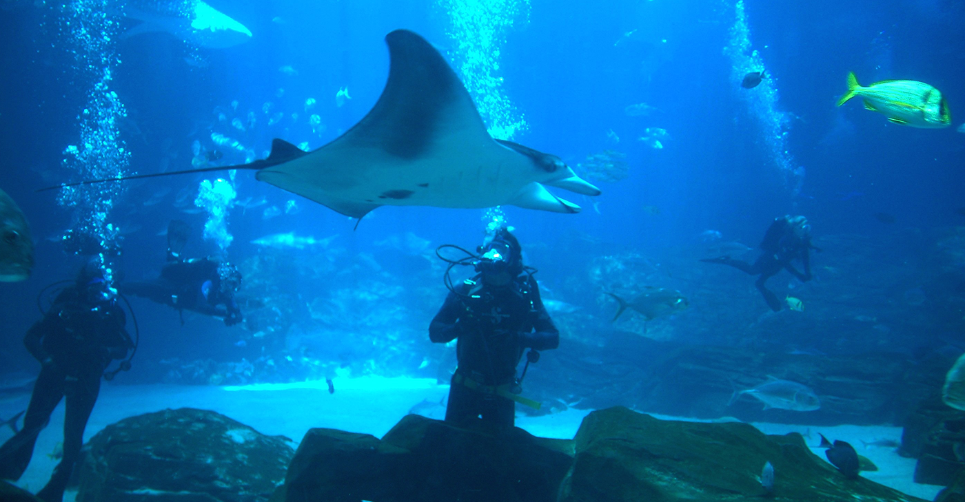 Explore Georgia Aquarium Animal Conservation Aquarium