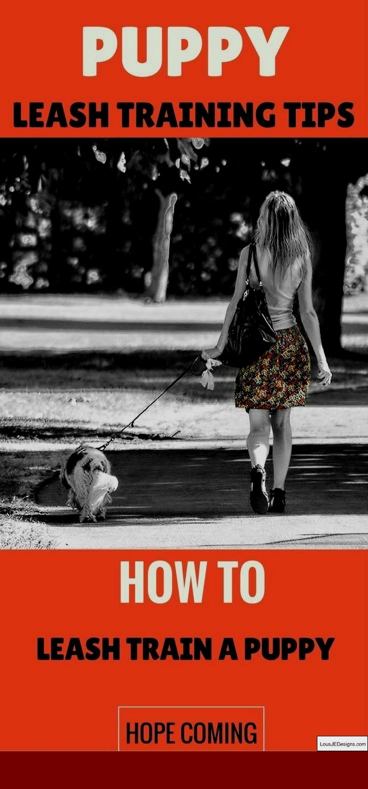 How To Train A Dog To Run Beside You And Pics Of Best Way To Train