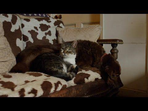 """Felino se transforma em """"gato-guia"""" para cão cego e parcialmente surdo"""