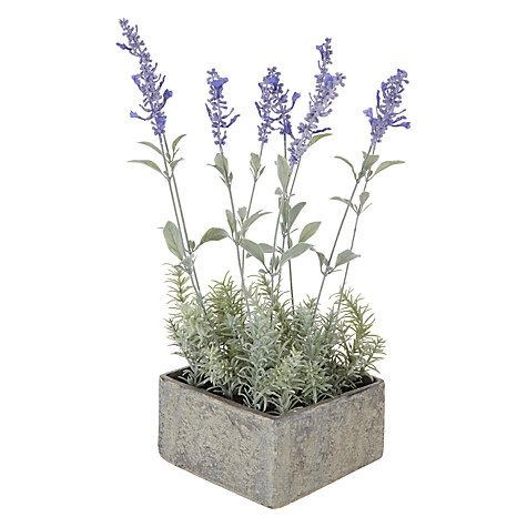 John lewis artificial lavender pot pinterest john lewis buy john lewis lavender pot online at johnlewis mightylinksfo
