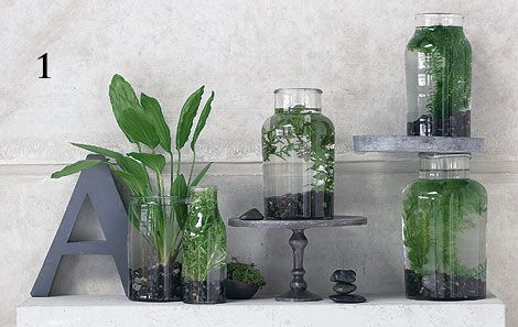 Das 7 Zimmer zimmerpflanzen überraschend inszeniert plants flowers and gardens