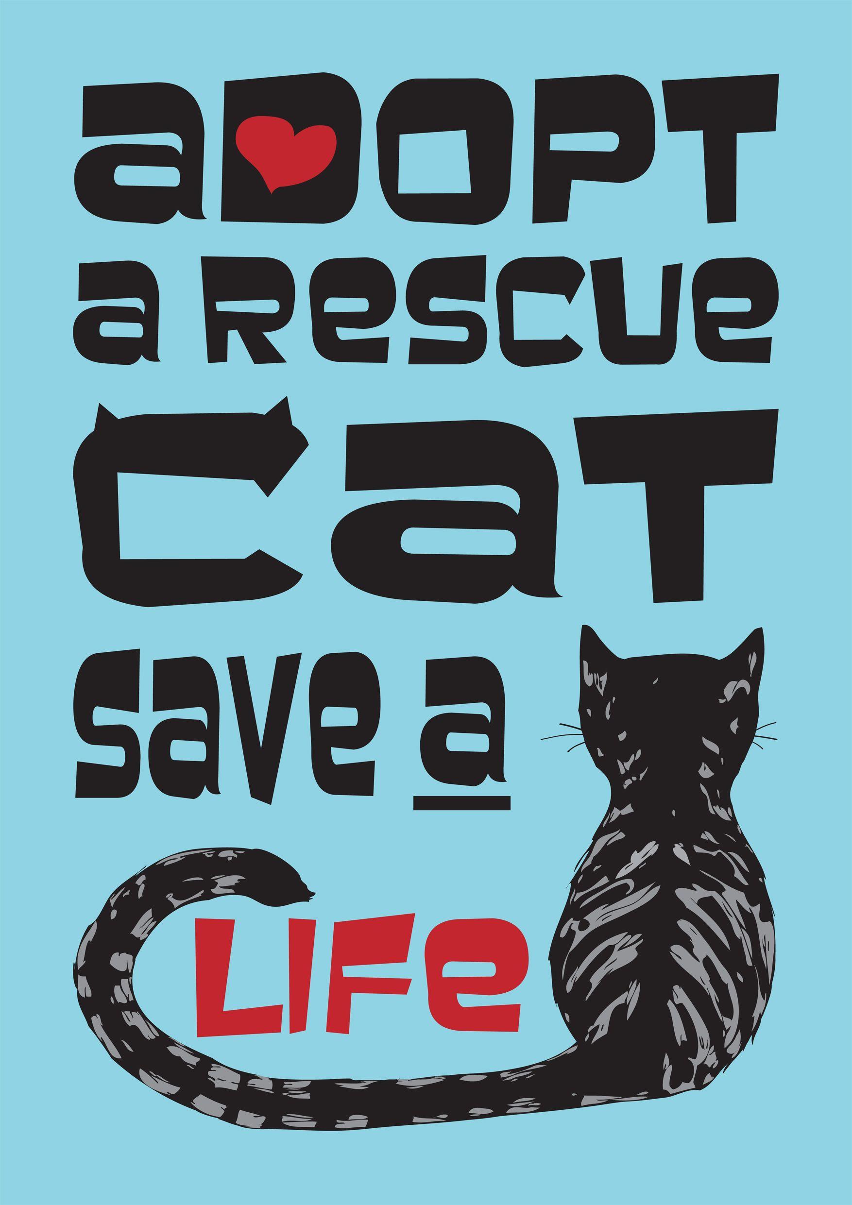 Adopt A Rescue Cat Copyright Sea Salt Samphire Cat Rescue Cats Dog Cat