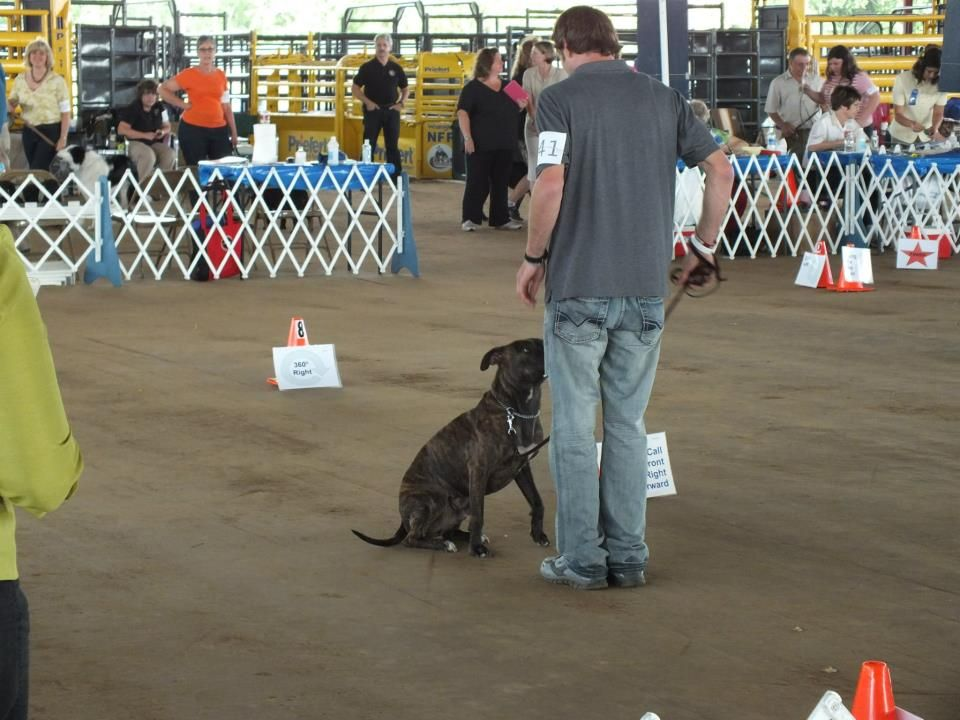 Perfect Call Dog Front And Finish Around Obedience School For