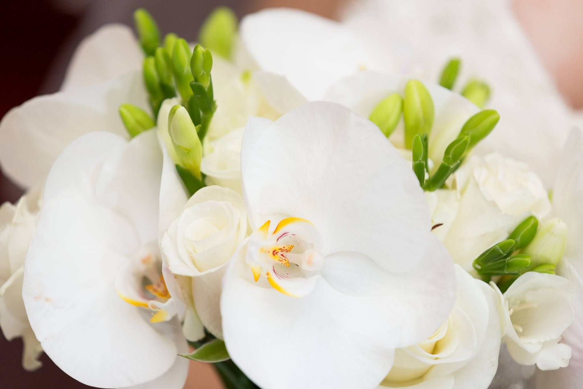 White phalaenopsis orchid bridal bouquet with freesia and roses ...