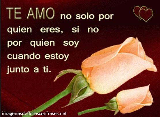 Rosas Rojas De Amor Con Frases Romanticas Rosa Unicas Pinterest