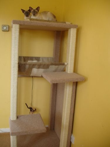 How to make a cat scratching post siamese cats and for Homemade cat tower