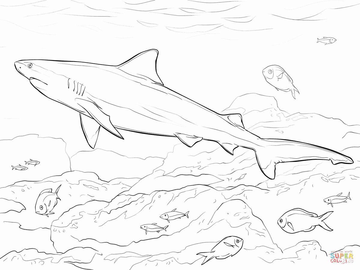 Shark Coloring Pages Coloring Rocks Shark Coloring Pages Shark Pictures Animal Coloring Pages