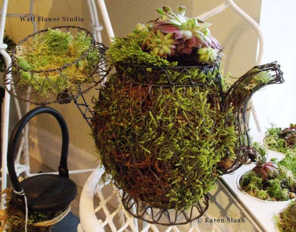 Hens And Chicks In A Wire Tea Pot Frame.