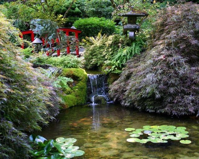 Jardin japonais : le monde vert du pays du soleil | Bassin aquatique ...