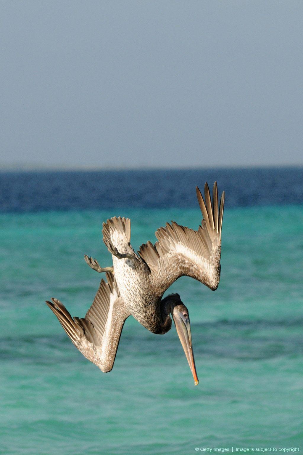 Los Roques National Park Venezuela Caribbean Islands Wildlife Nature White Sand Beach
