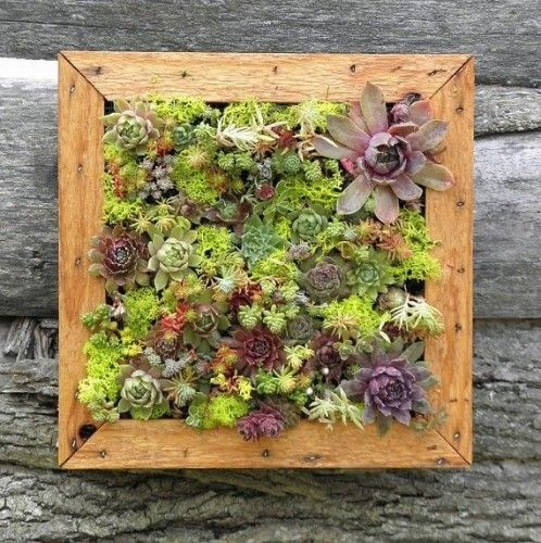 Succulent Vertical Living Wall Art Kit By So This Is The Coolest Thing Ever I Love That Alive Nothing Brings Life And Freshness To A