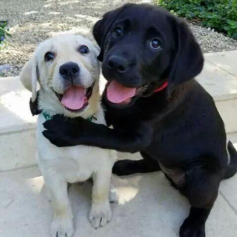 Pin By Kay On C U T I E S Cute Dogs Puppy Dog Pictures