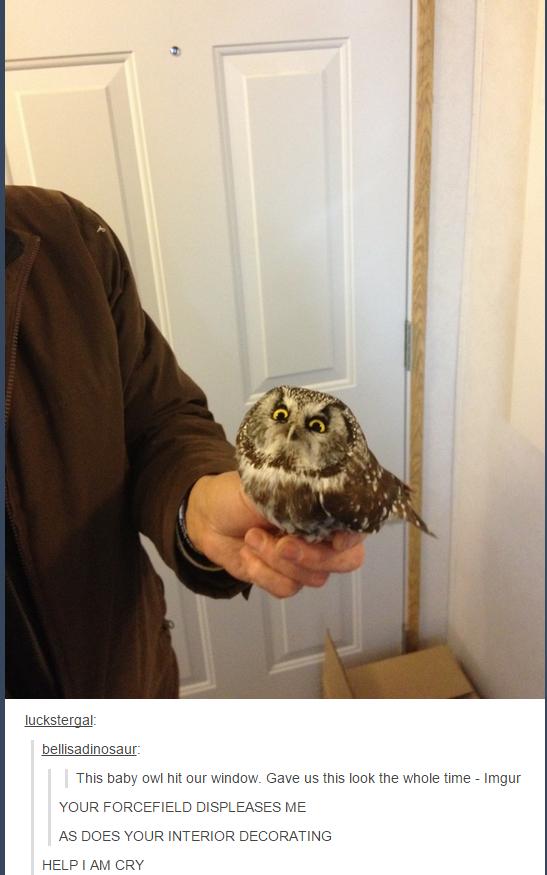 Owls on tumblr