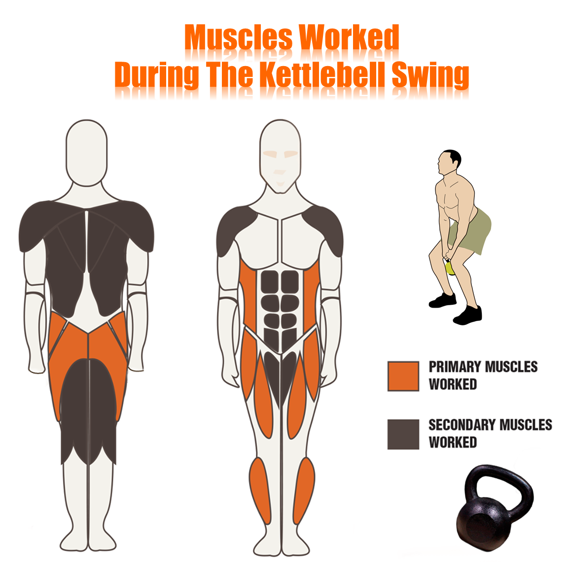 Muscles Worked during Kettlebell Swing   The Top 10 Reasons Why ...