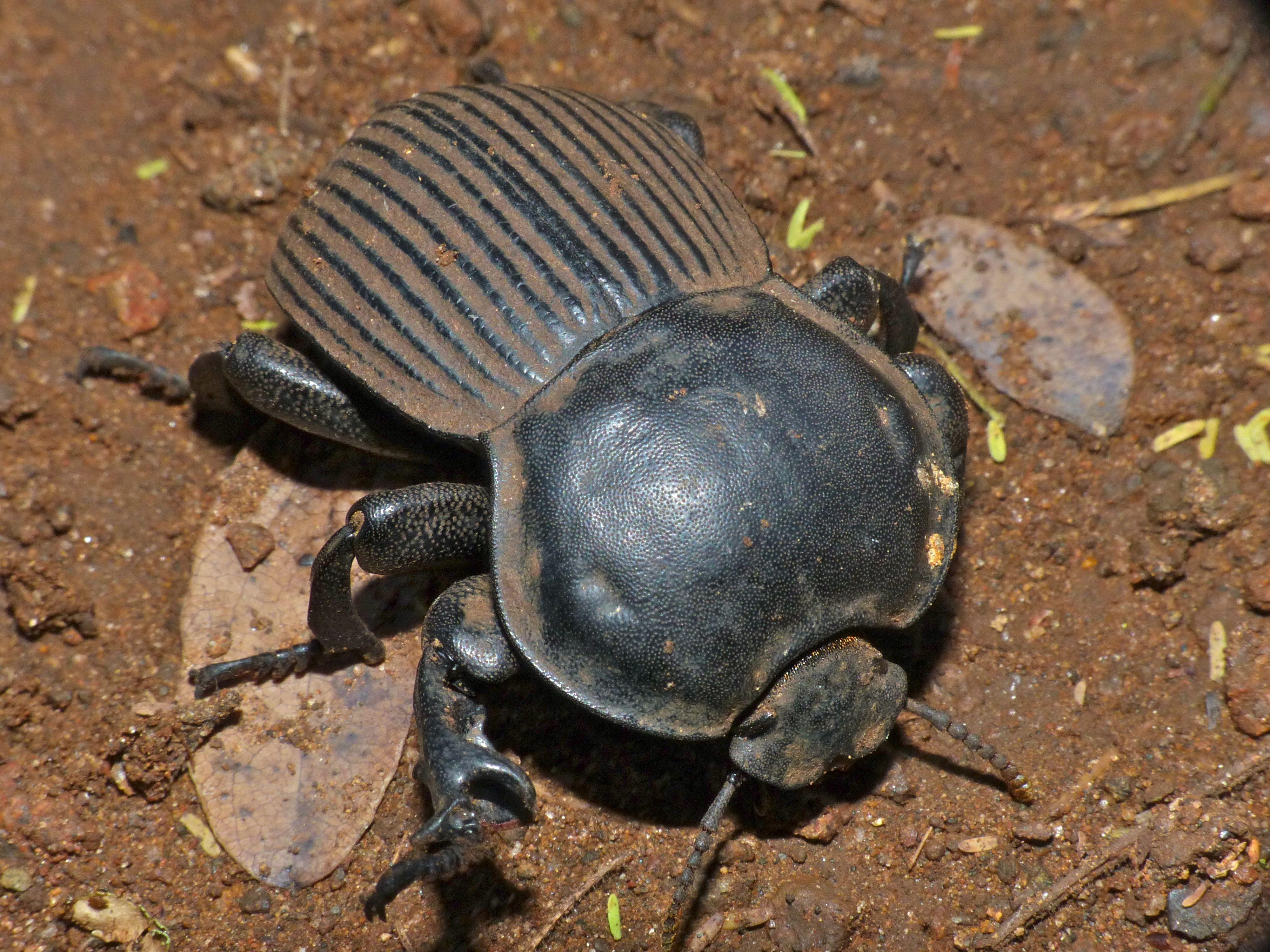 Insects おしゃれまとめの人気アイデア Pinterest Tom 画像あり