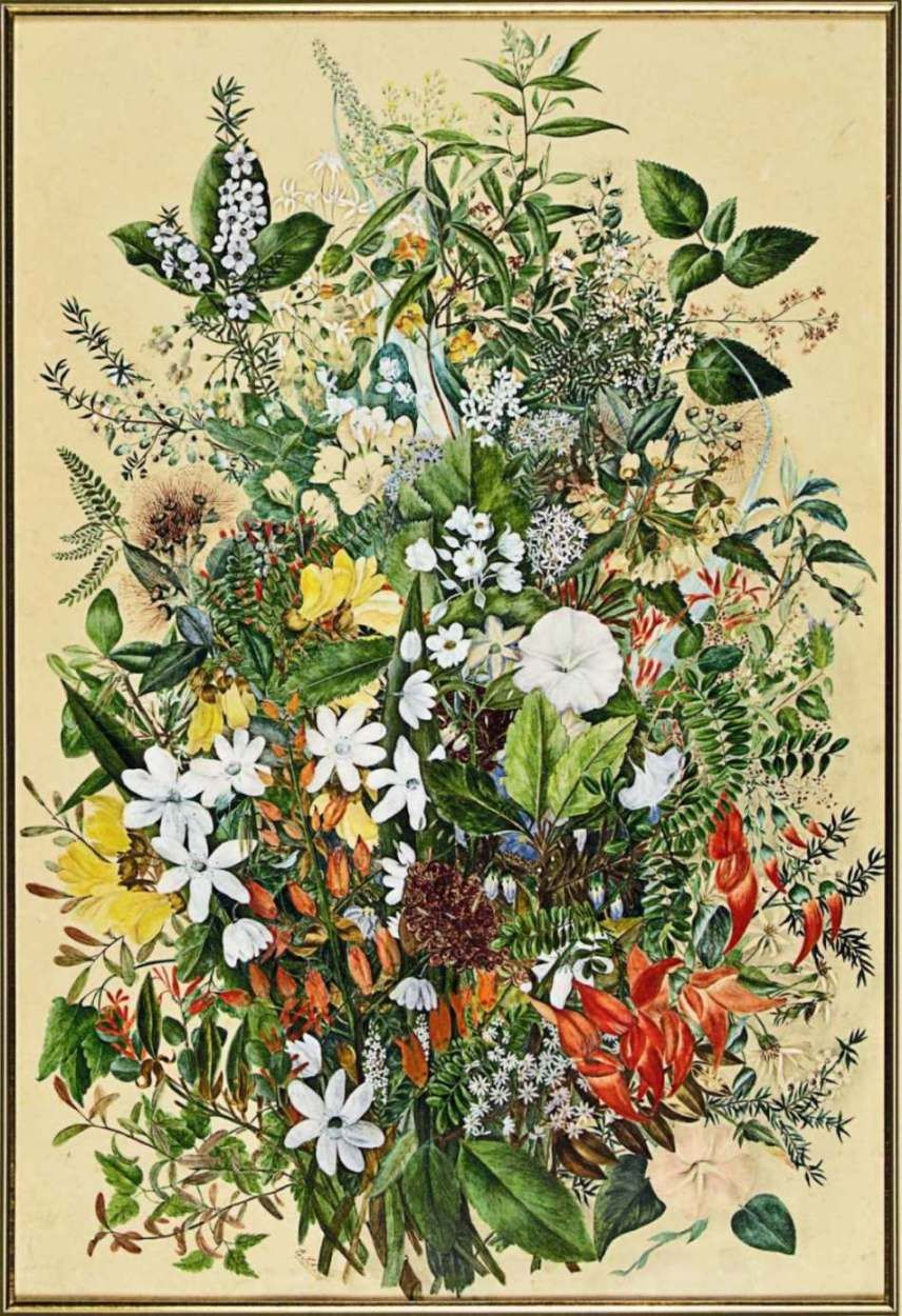 New Zealand Native Flowers Botanical drawings, Nz art