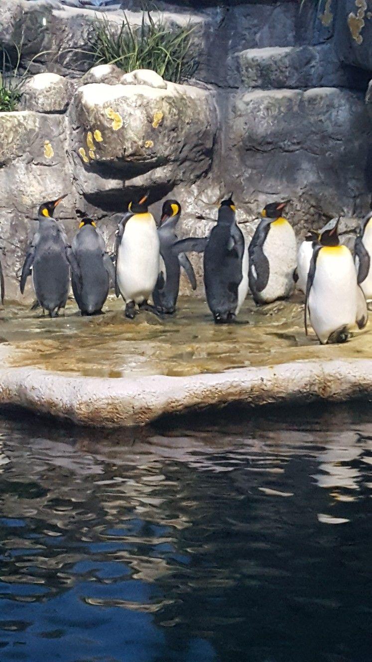 Aquarium at Moody Gardens Moody gardens, Galveston