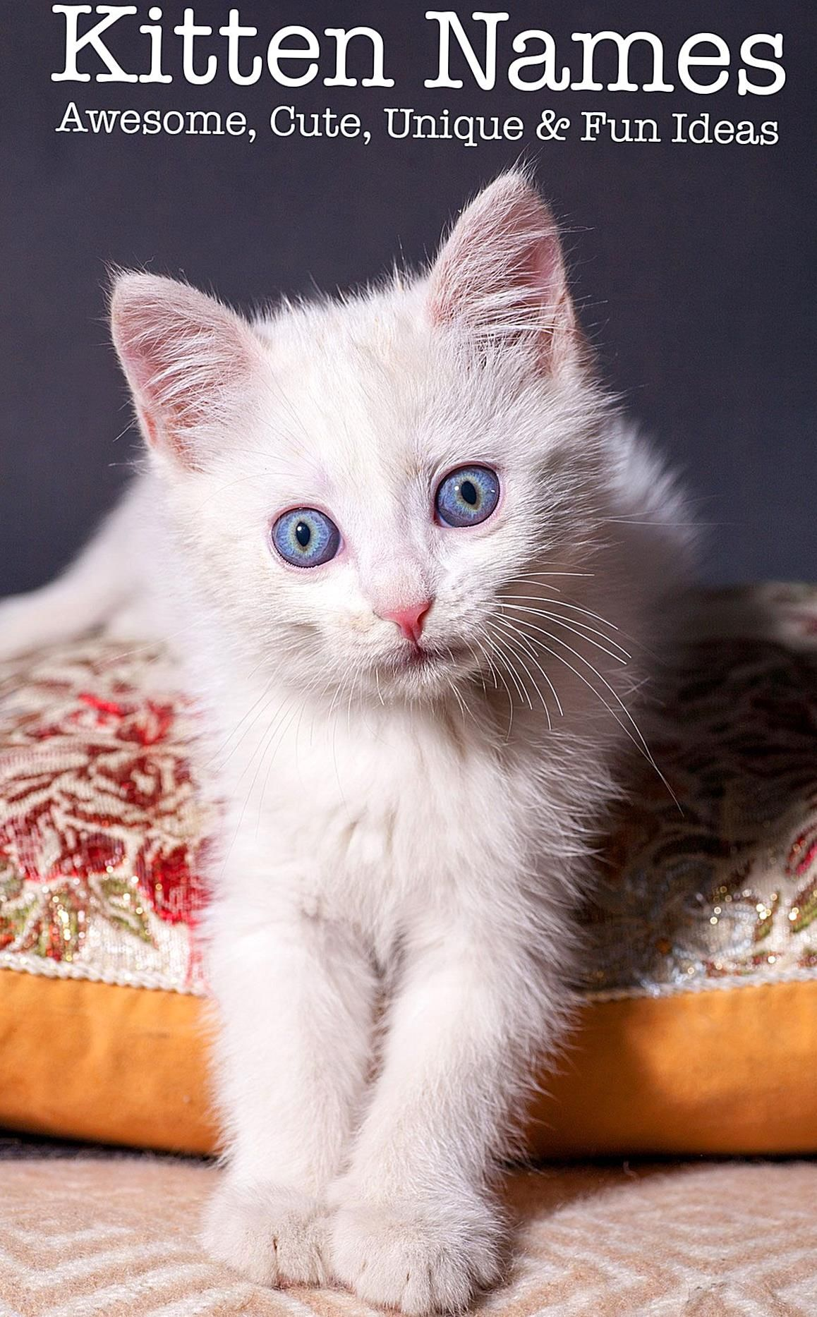 All The Best Kitten Names In One Place With Cute Unique And Creative Names For Your Baby Boy Or Girl Kitty Find The Perf In 2020 Kitten Names Girl Cat Names