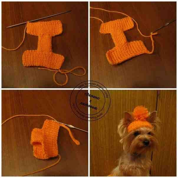 Pin de Paula en Funny | Pinterest | Mascotas, Ropa perros y Ropa ...