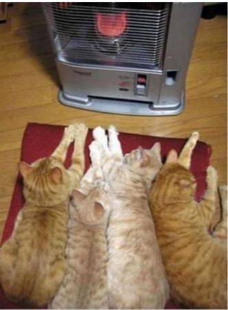 These kitties know where the best place in the house is!