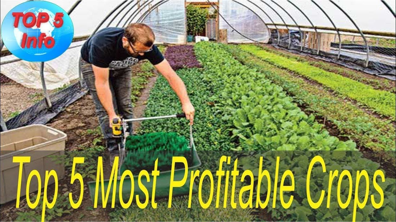 Top 5 Most Profitable Crops To Grow In Your Backyard Growing Vegetables Growing Microgreens Specialty Crops Urban backyard farming for profit