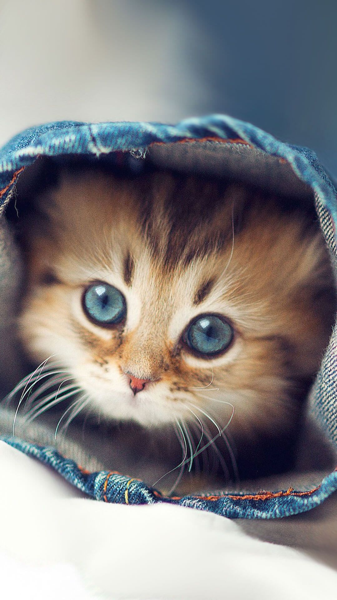 Cute kittens wallpapers for iphone 6 hd animal wallpaper - Cute baby animal desktop backgrounds ...