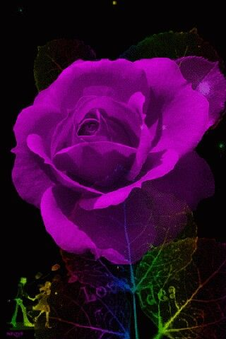 Všetky kvety sveta