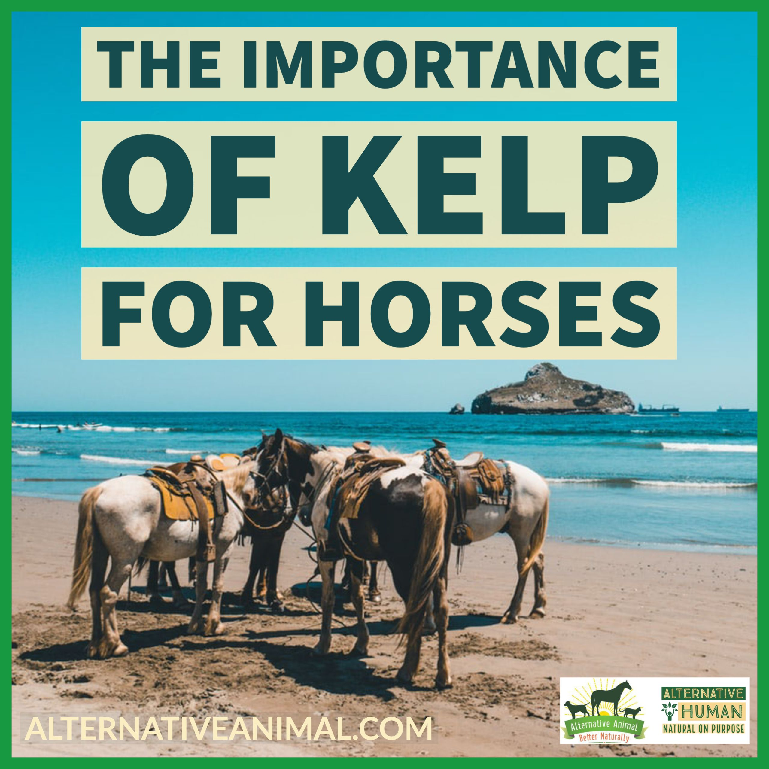The Importance Of Kelp For Horses Alternative Animal