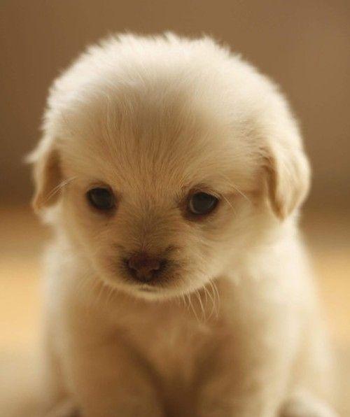 Bebe Chien Trop Trop Cute Chien Mignon