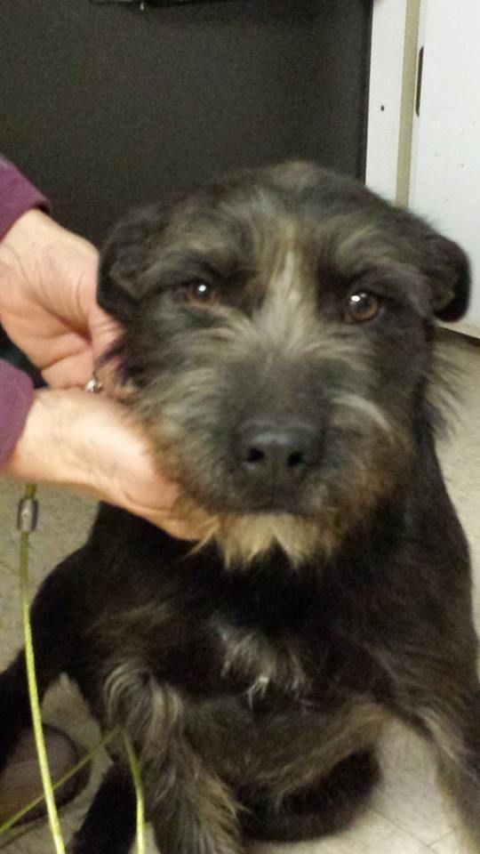 Adopt Clint On Humane Society Terrier Mix Dogs Terrier Mix