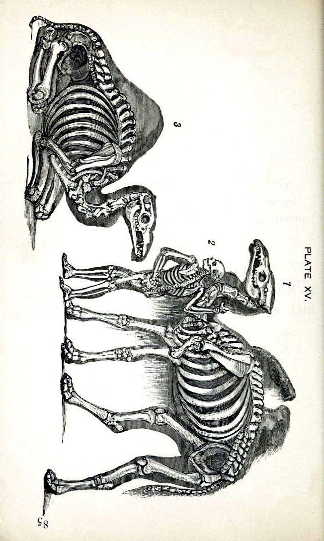 Camel Skeletons Blank Notecard Halloween Handmade Vintage Image by ...
