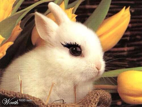 White Bunny Rabbit Cute Easter Picture Little Wallpaper