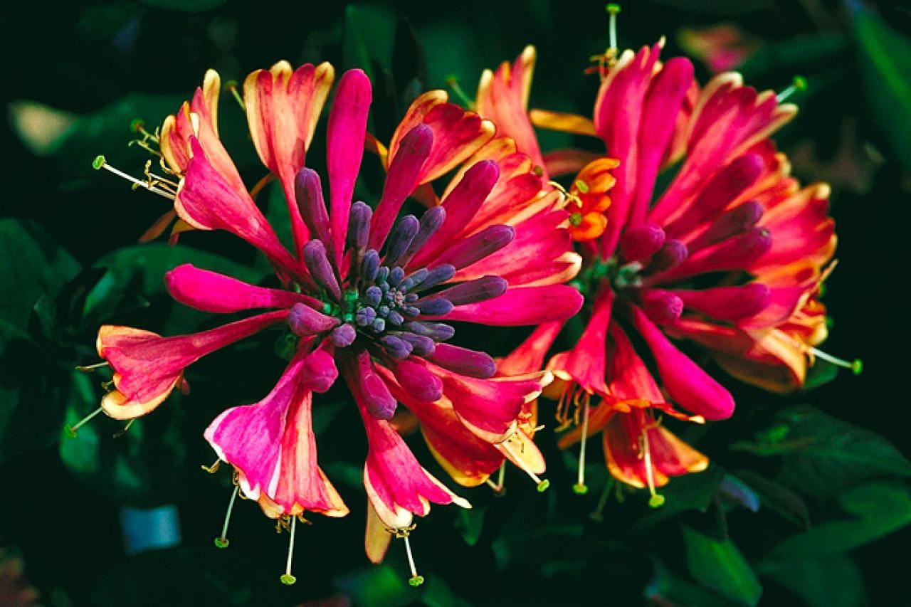 Plants That Bloom In Summer Diy Garden Projects 400 x 300
