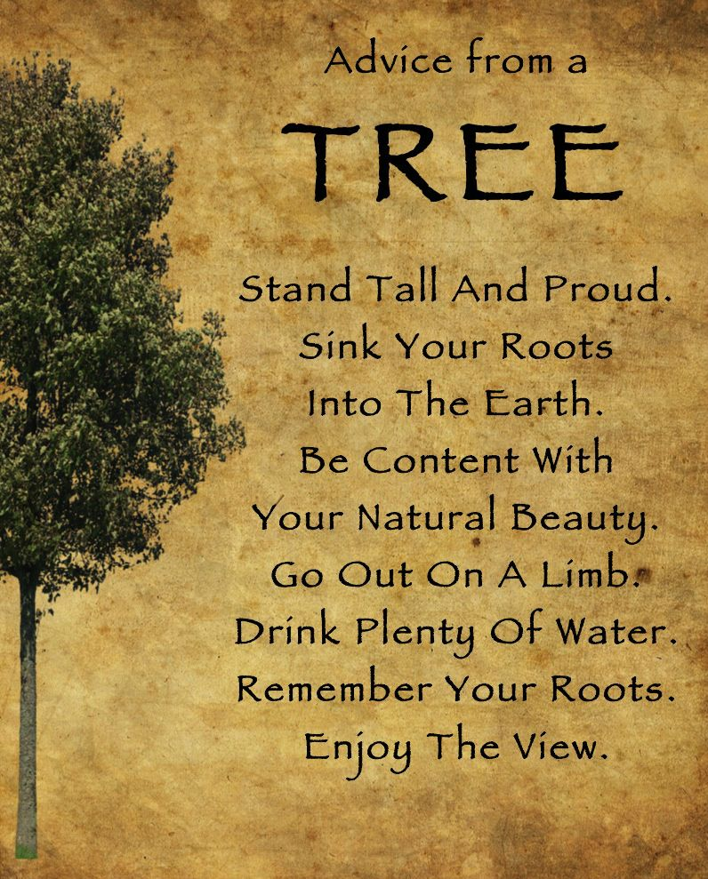 Advice from a tree Archives Tree quotes