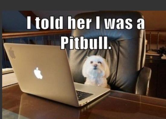 Online Dog Dating...aww Snowball