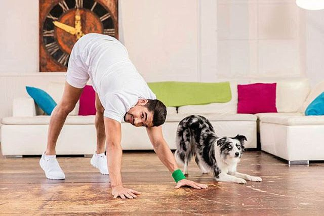 Exercise For Your Pets Dogs, Cats, Small Pets Dogs are