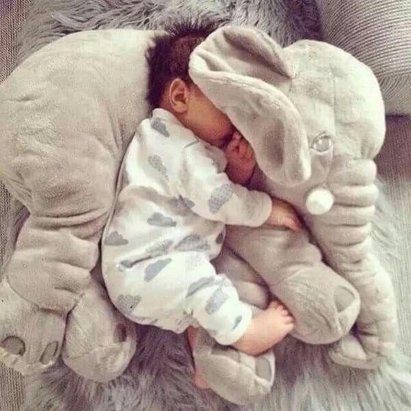 elephants baby elephant new baby