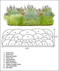 Design Layout Ornemental Grasses Google Search With Images